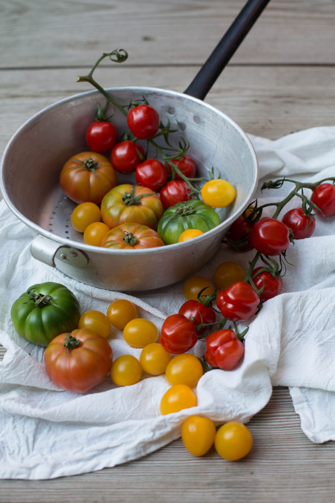 bunte-tomaten-held-am-herd